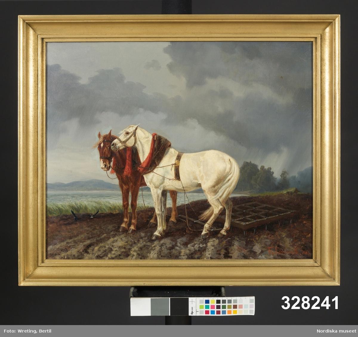Ett agrart landskap med en havsvik och berg i bakgrunden. Två arbetshästar förspända en harv står vilande på stället. Hästarna är korrekt avbildade, medan anspänningen av redskapet genom en spannvåg verkar utländsk till sin karaktär. Hästarna är förspända med kollerselar.  Djur, häst.