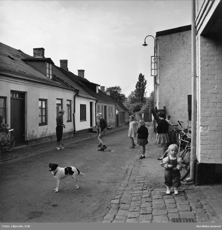 Barn och en hund som leker på en gata i Malmö.