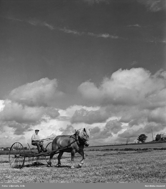 Hästdragen hjulräfsa på slättbygden vid Lösen kyrka i östra Blekinge