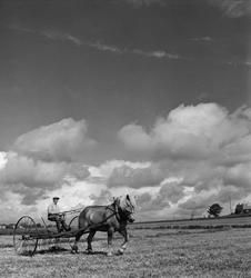 Hästdragen hjulräfsa på slättbygden vid Lösen kyrka i östra