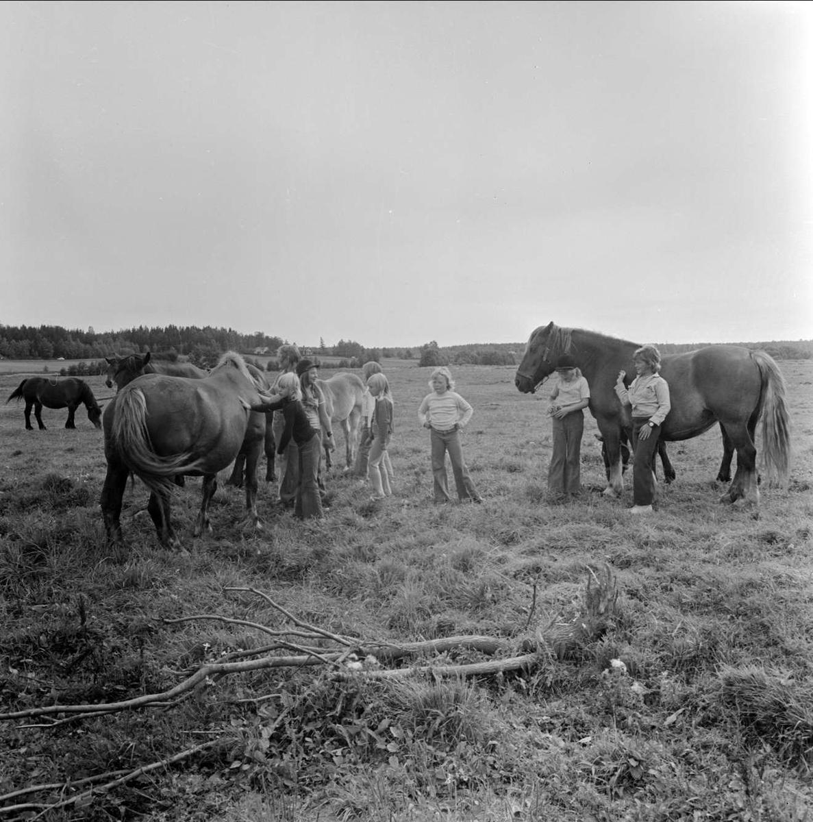 Häst med mustasch, sannolikt i Tierps socken, Uppland augusti 1973