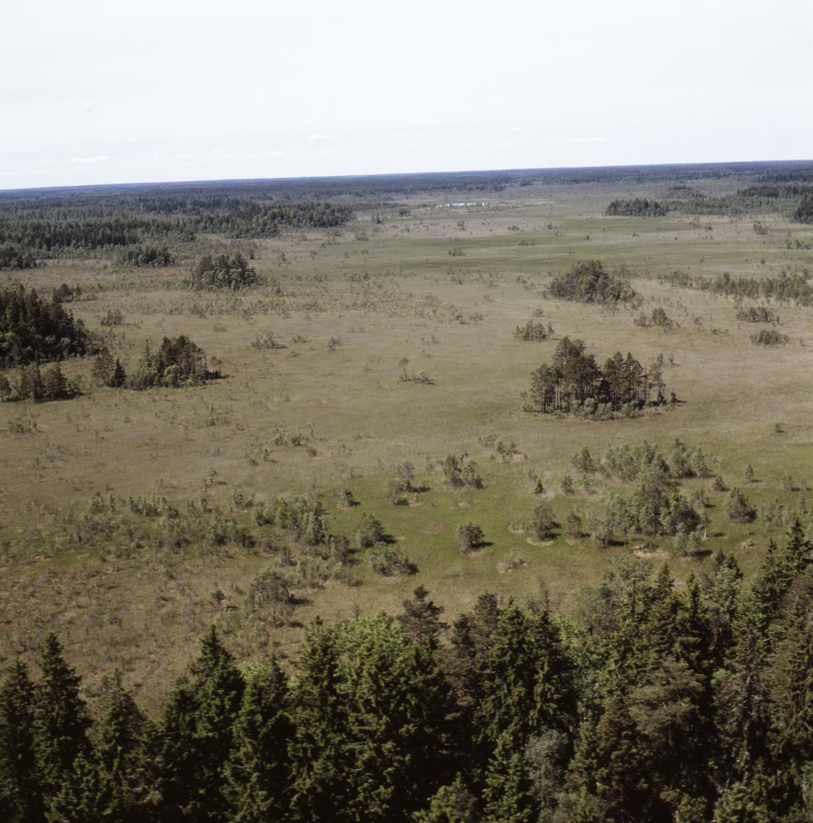 Vy över Stenstamon mossmark och Florarna myrmark, Uppland, juni 1989