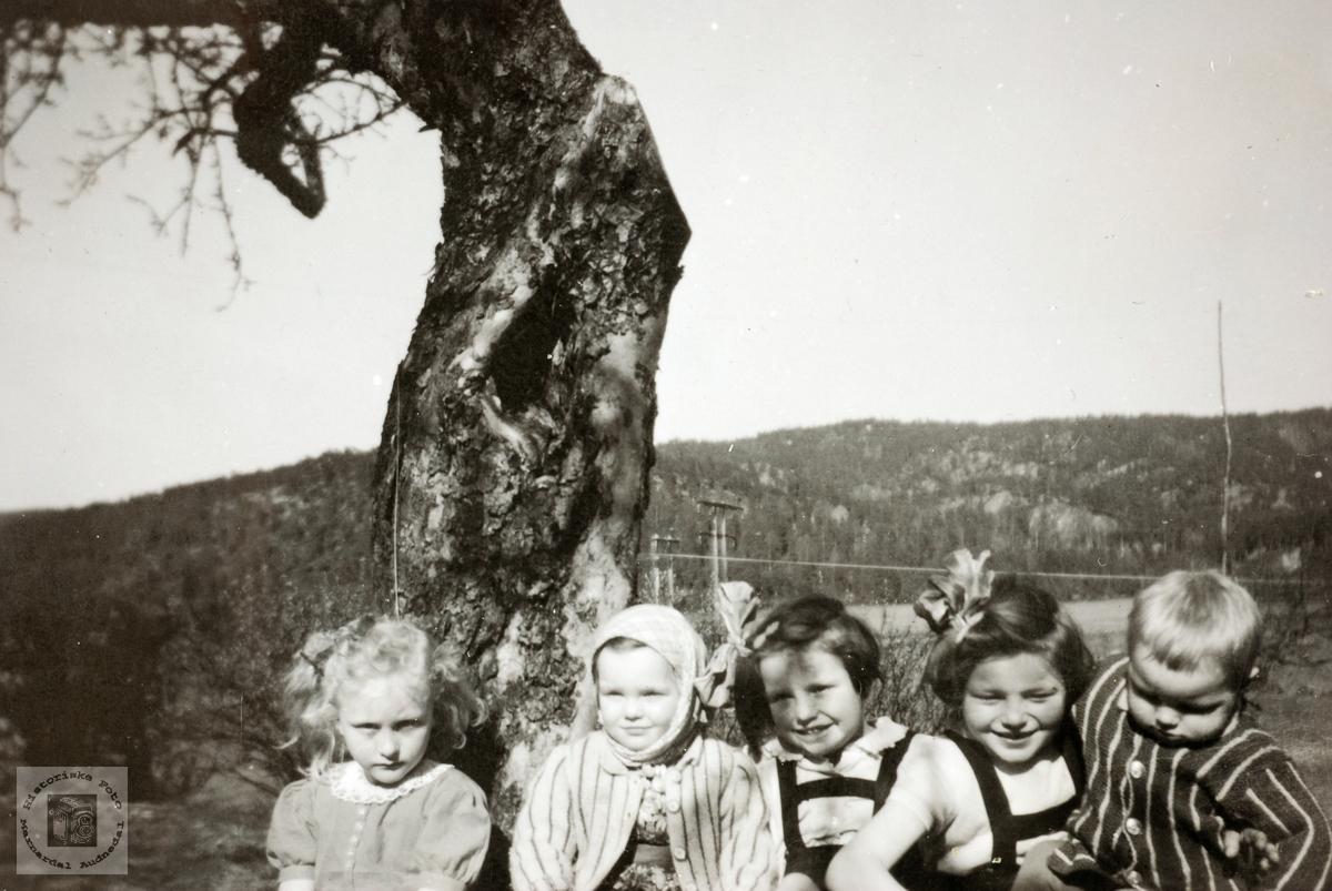 Barn på Smedsland, Grindheim Audnedal.
