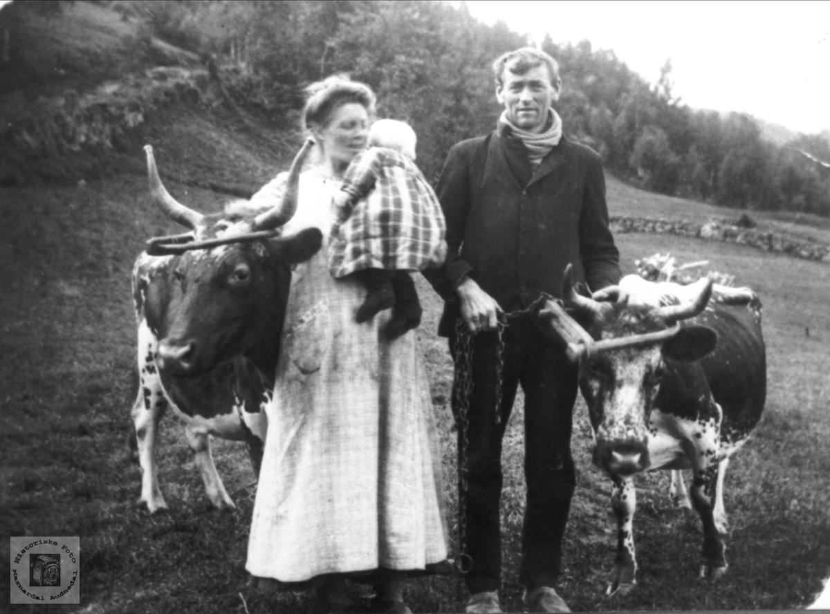 Liten familie leier kyr på beite Ubostad i Grindheim.