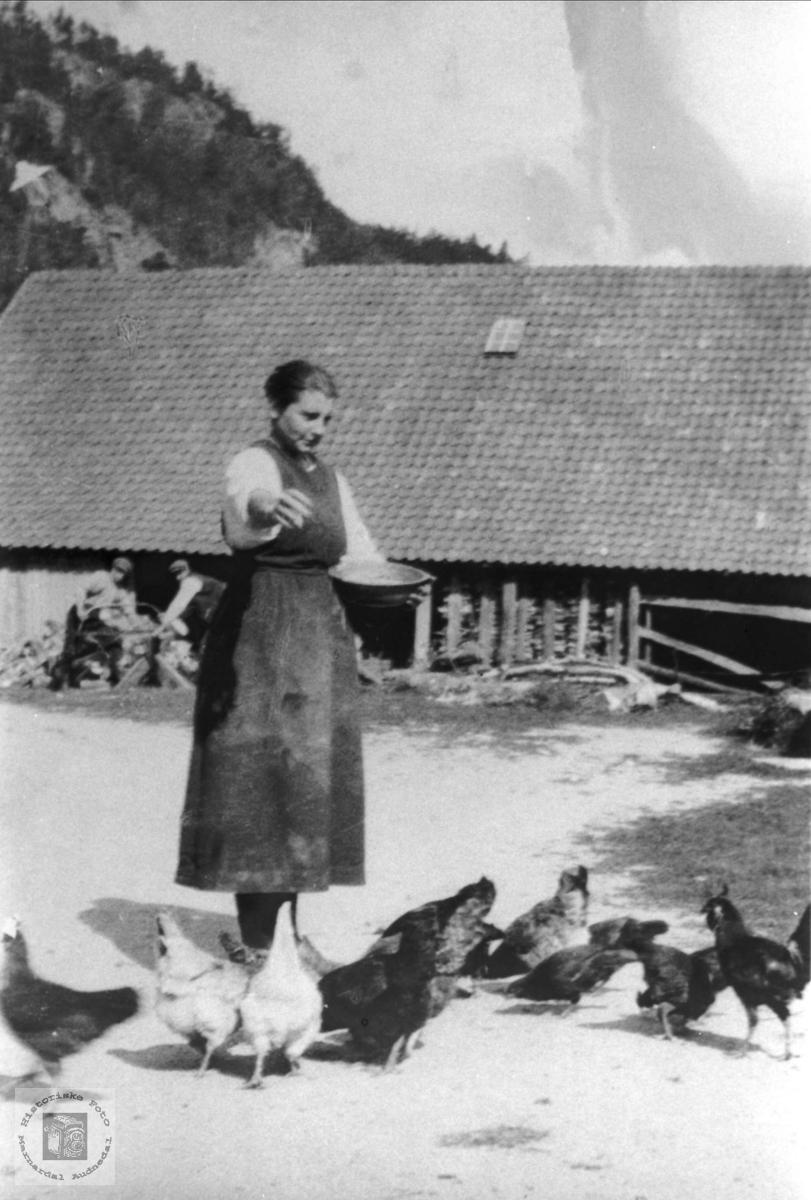 Mating av hønene og saging av ved. Neregarden, Nedre Kleveland.