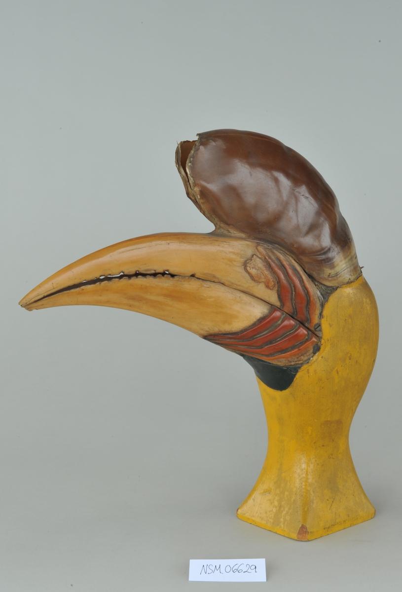 Gulaktig fuglenebb med fire røde streker nærmest hodet, over dette en utvekst som er like tykk men kortere enn nebbet, og mørke brunt. På trestativ. Hornbill eller Nesehornfugl.