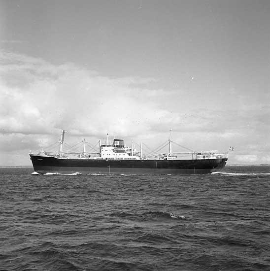 Fartyg nr. 169 M/S Fernleaf, lastfartyg.