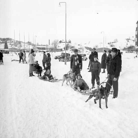 "Enligt notering: ""Brukshundsklubben 16/1 55""."