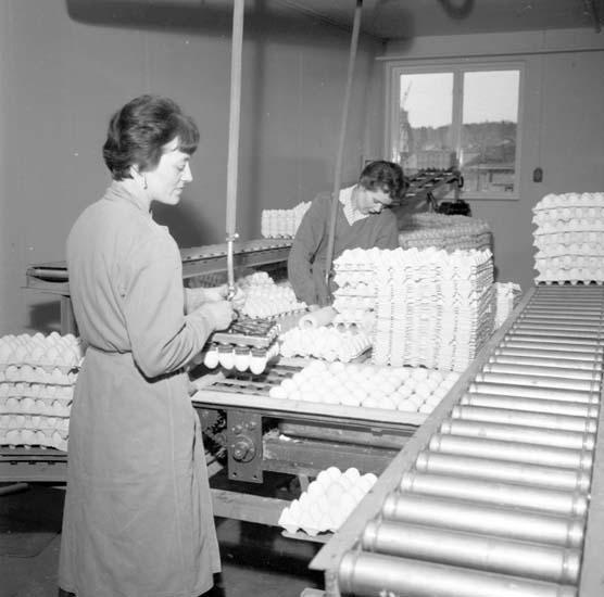 Leverans av ägg från Äggcentralen, Uddevalla, i mars 1959