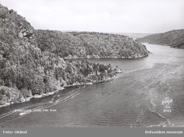 """Tryckt text på kortet: """"SVINESUND. Utsikt från bron"""". ::"""