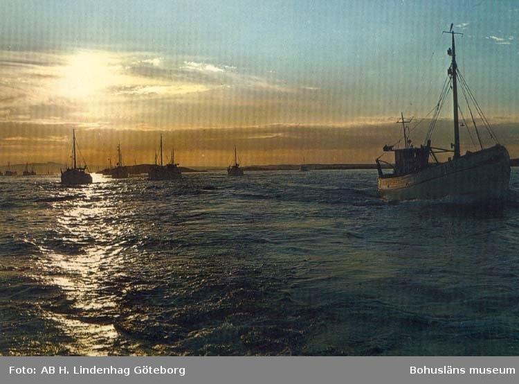 """Tryckt text på kortet: """"Västkusten. Fiskeflottan på väg till fångstplatsen."""""""