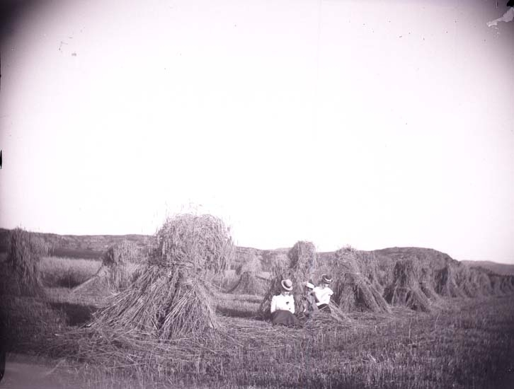 Enligt text som medföljde bilden: Anne Lyzell, Aågot Stub, Valter Lycke vid en sädesskyl. 6/8 1899 Fiskebäck.