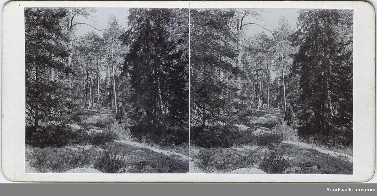 Del av serie med stereoskopbilder bestående av två fotografier klistrade på kartong. Stämplad Erik Zetterberg, Rönninge, på baksidan. Uppgifter om årtal, datum, nummer i bildserie, samt på några även uppgifter om motiv. Se även SuM 3212:1-53, 3213:1-38.