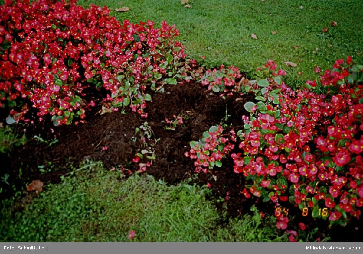 Blomsterrabatt i Gunnebo slottspark, maj 1995.