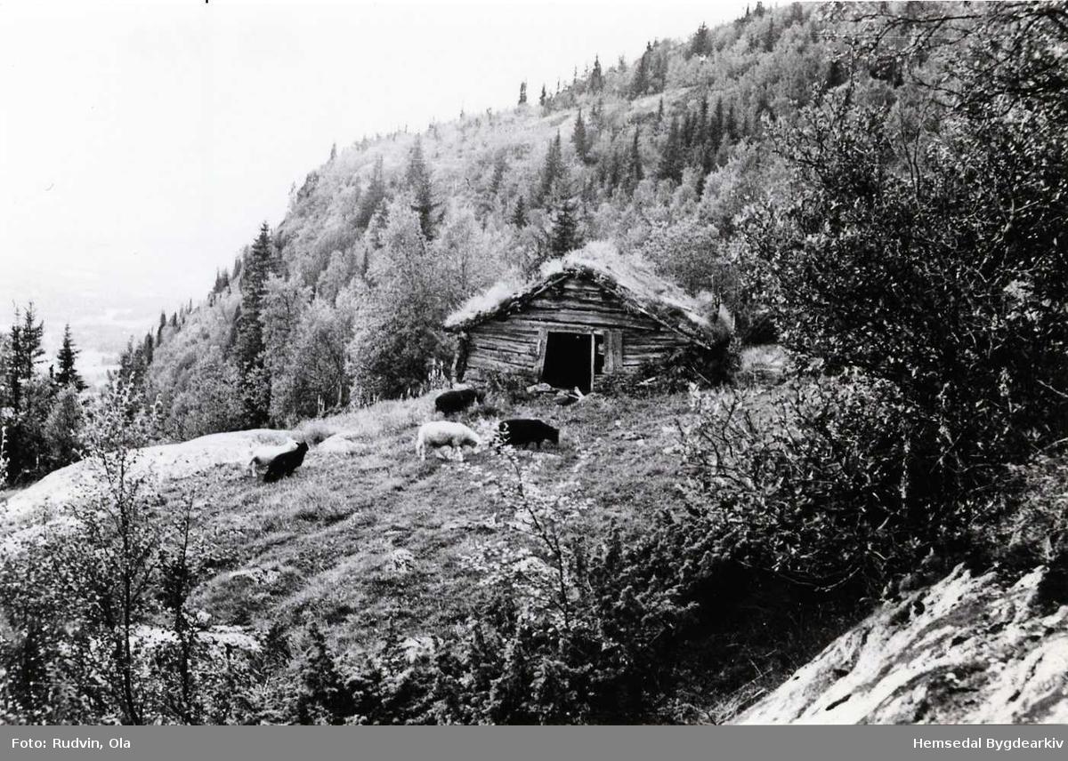 """Fjøset på """"Finn"""", heimestølen til Rundtop, i 1953."""