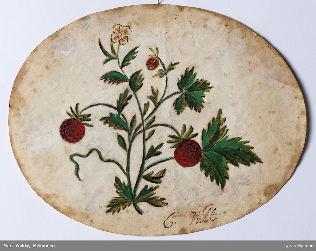 Jordbærblomst.