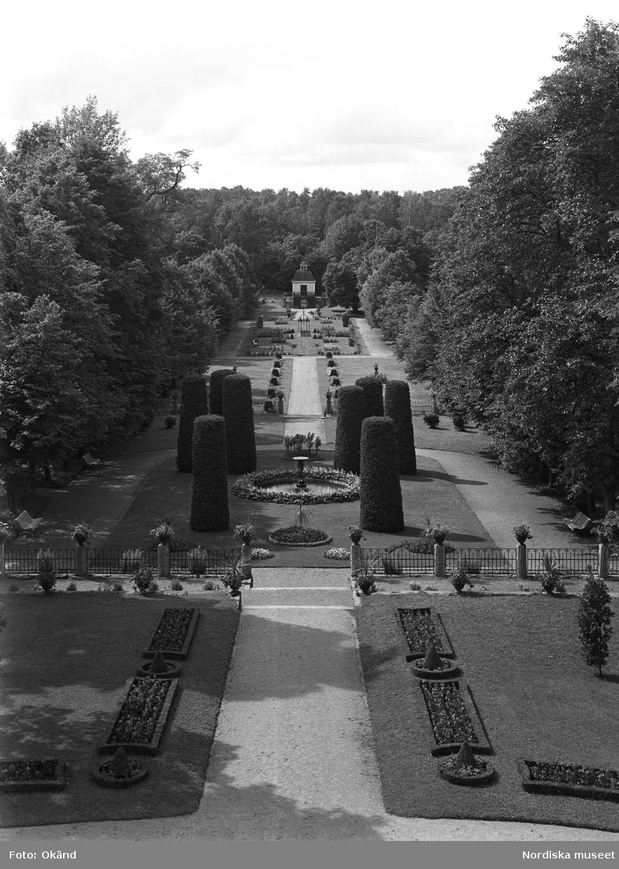Rosengården på Julita gård i Södermanland sedd från huvudbyggnaden, 1931. Stilträdgård. Lustträdgård.