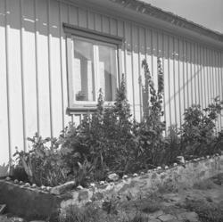 Plantering längs husvägg på Käringön. Muren är smyckad med s