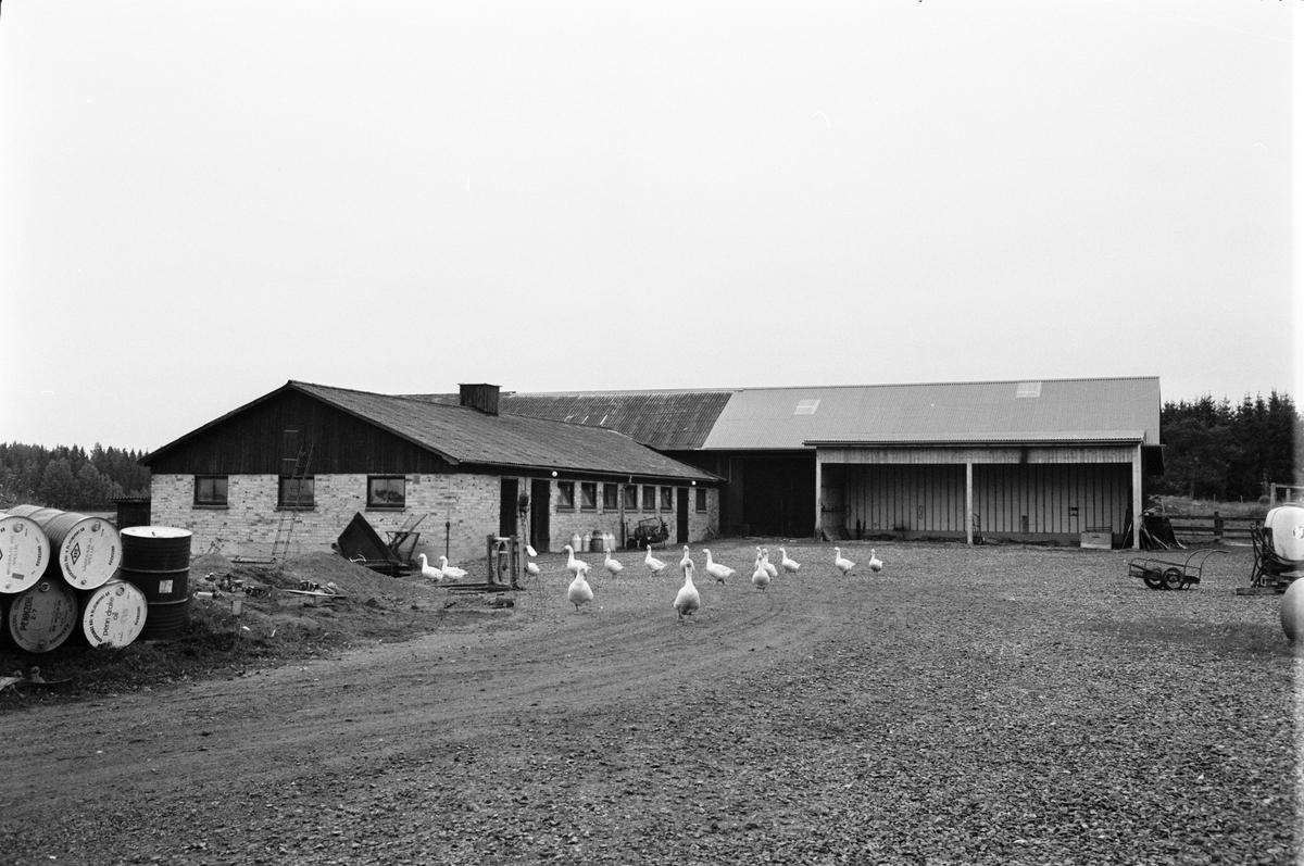 Ladugård och loge, Gropdal, Kölinge 2:6, Rasbokils socken, Uppland 1982
