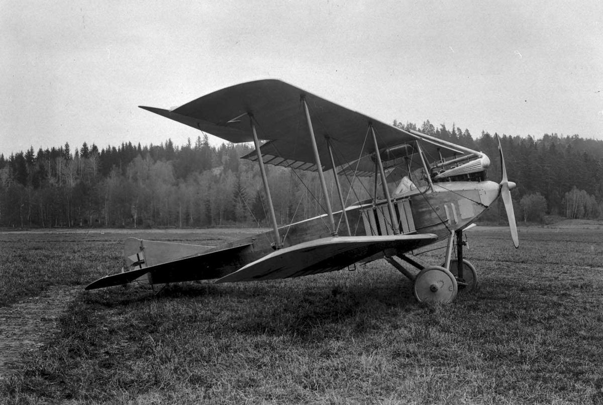 Ett fly på bakken