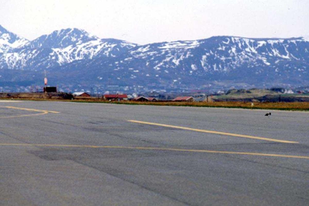 Lufthavn/flyplass. Leknes.