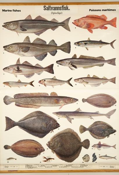 norsk saltvannsfisk