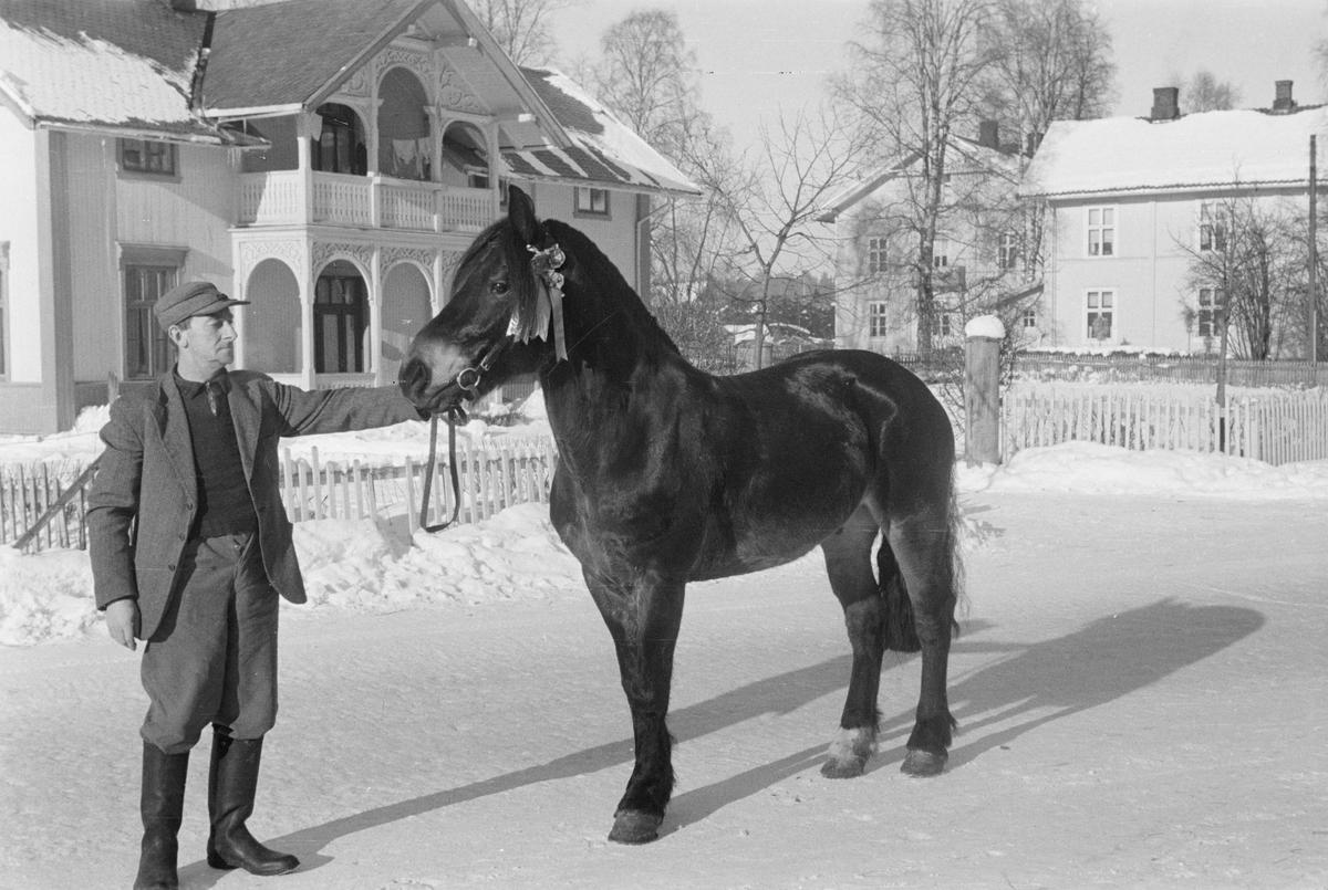 Mann og hest. Trysilvegen. Elverum.