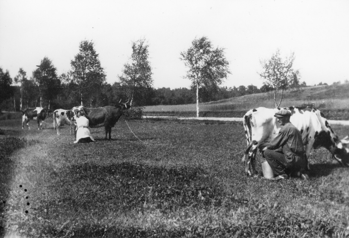 Horla, Västergården, Mjölkning