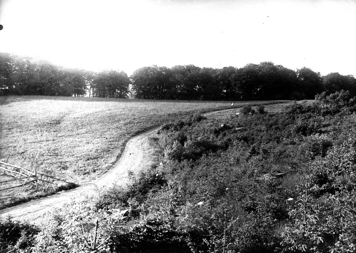 Häckningsterräng för rapphöna (Perdix p. perdix) 10 juni 1922