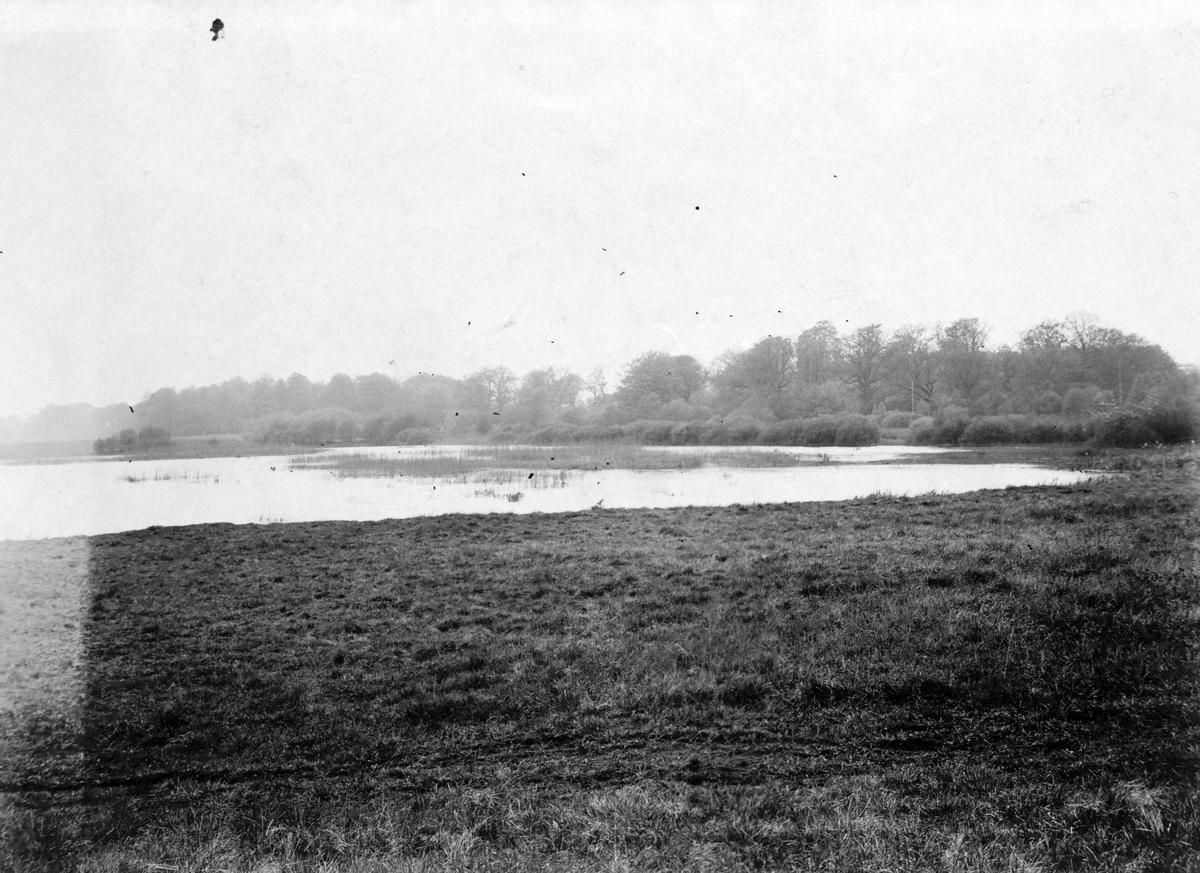 Biotop för smådopping. 9 maj 1916