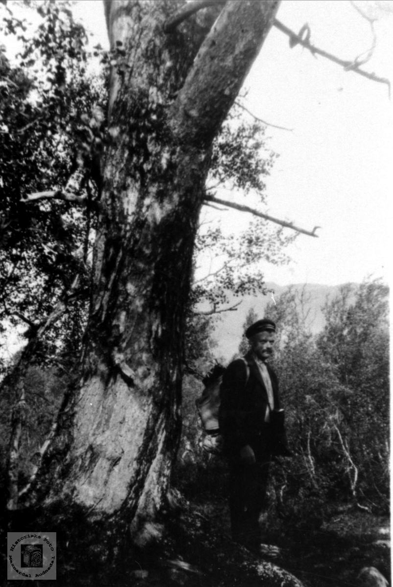 Olav Usland ved Stor eika på Uslandsheia