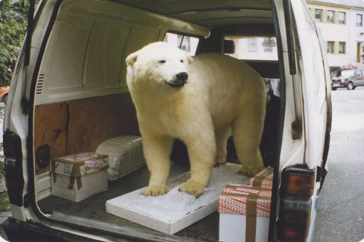 Landskap. Longyearbyen skole. En utstoppet isbjørn venter på skyss.