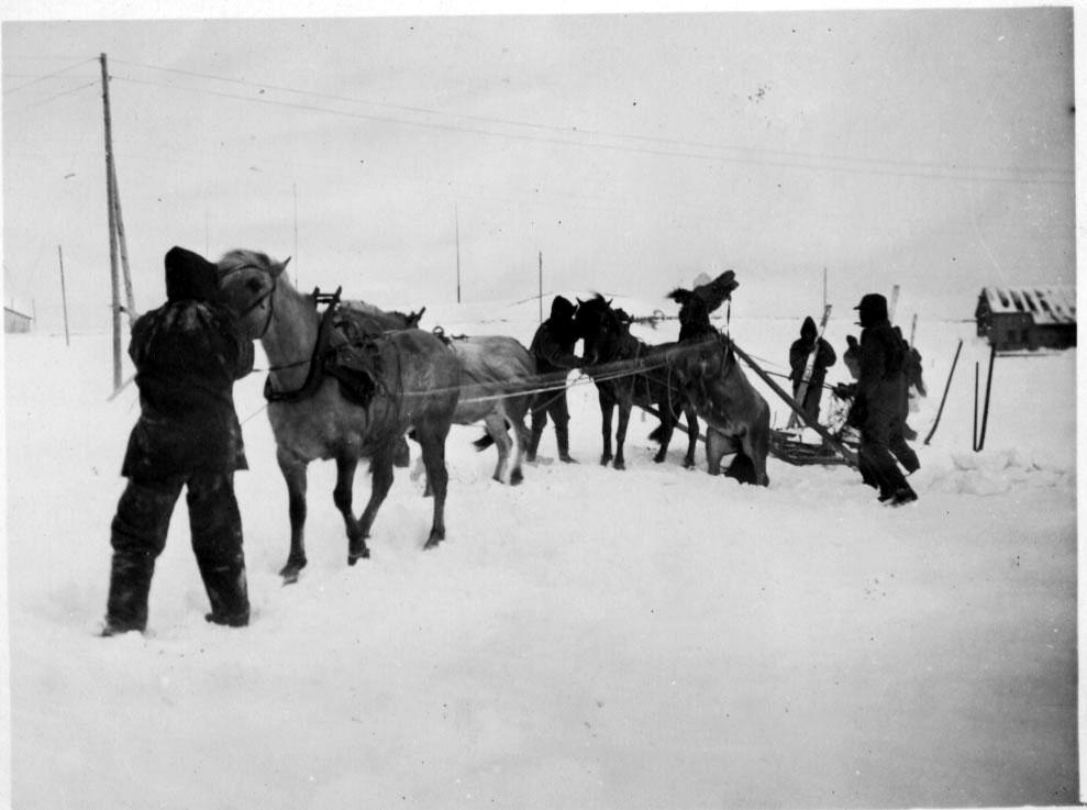 4 personer, med 4 hester og slede i arbeid. Bygning i bakgrunnen, snø på bakken.