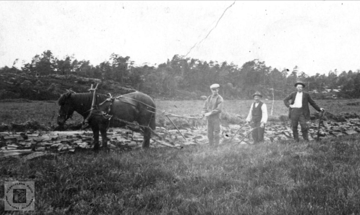 Hestepløying på Stormyra på Eikestøl