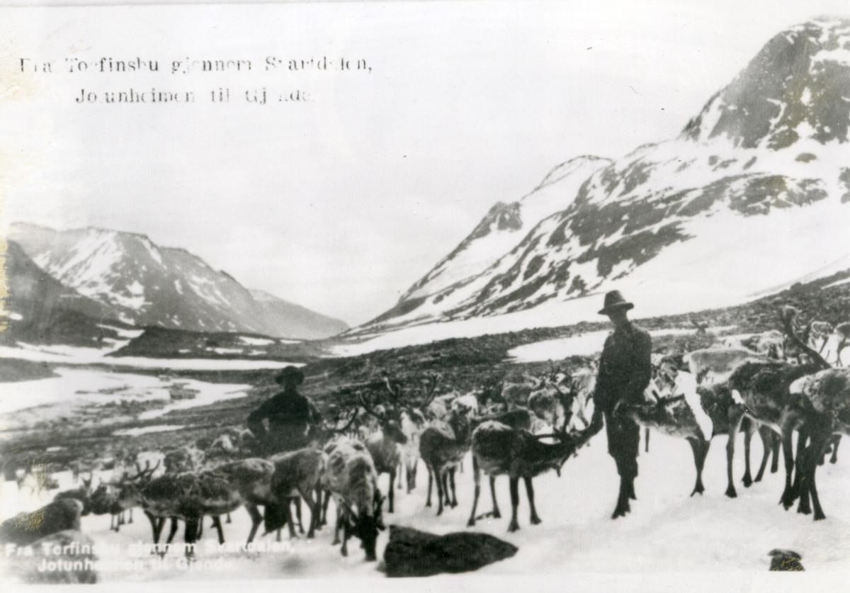 """Reinflokk i Jotunheimen, to menn i framgrunnen. Påskrift: """"Fra Torfinsbu gjennom Svartdalen, Jotunheimen til Gjende"""""""