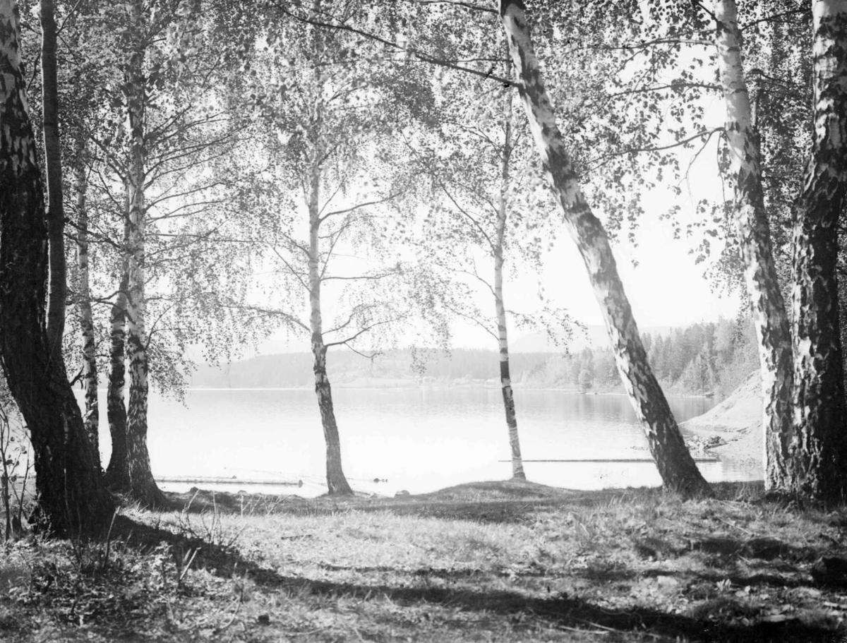 Fra Mosodden. Lågendeltaet mot Korgen. Bjørkeskog.