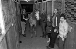 Ridskolan Svarta Hingsten i Kovland. Hästar, ridning och ren