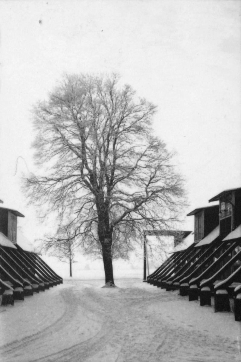 Lägerhyddor på F 3 Östgöta flygflottilj, vintertid 1946.