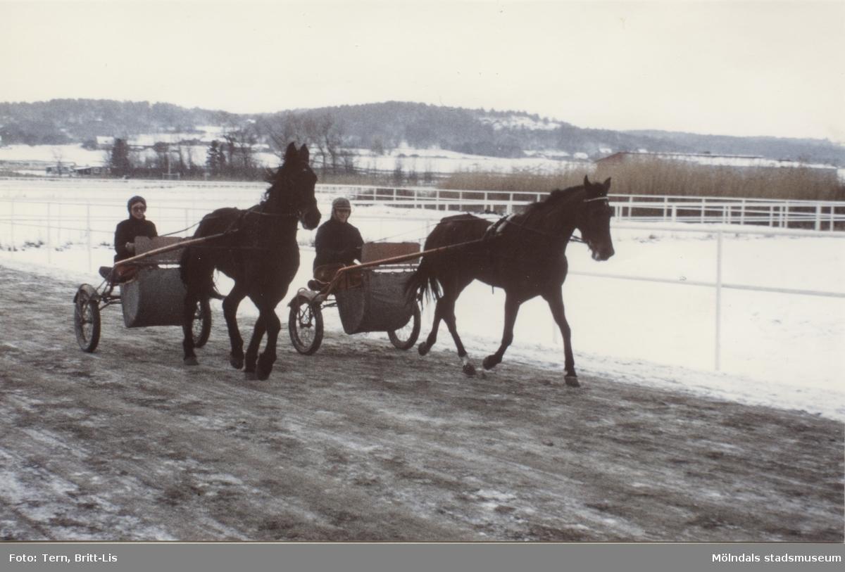 Travträning i Balltorp 1984.    Blandade bilder insamlade inför dokumentation av Åby Stallbacke och Stallgårdar 2015.