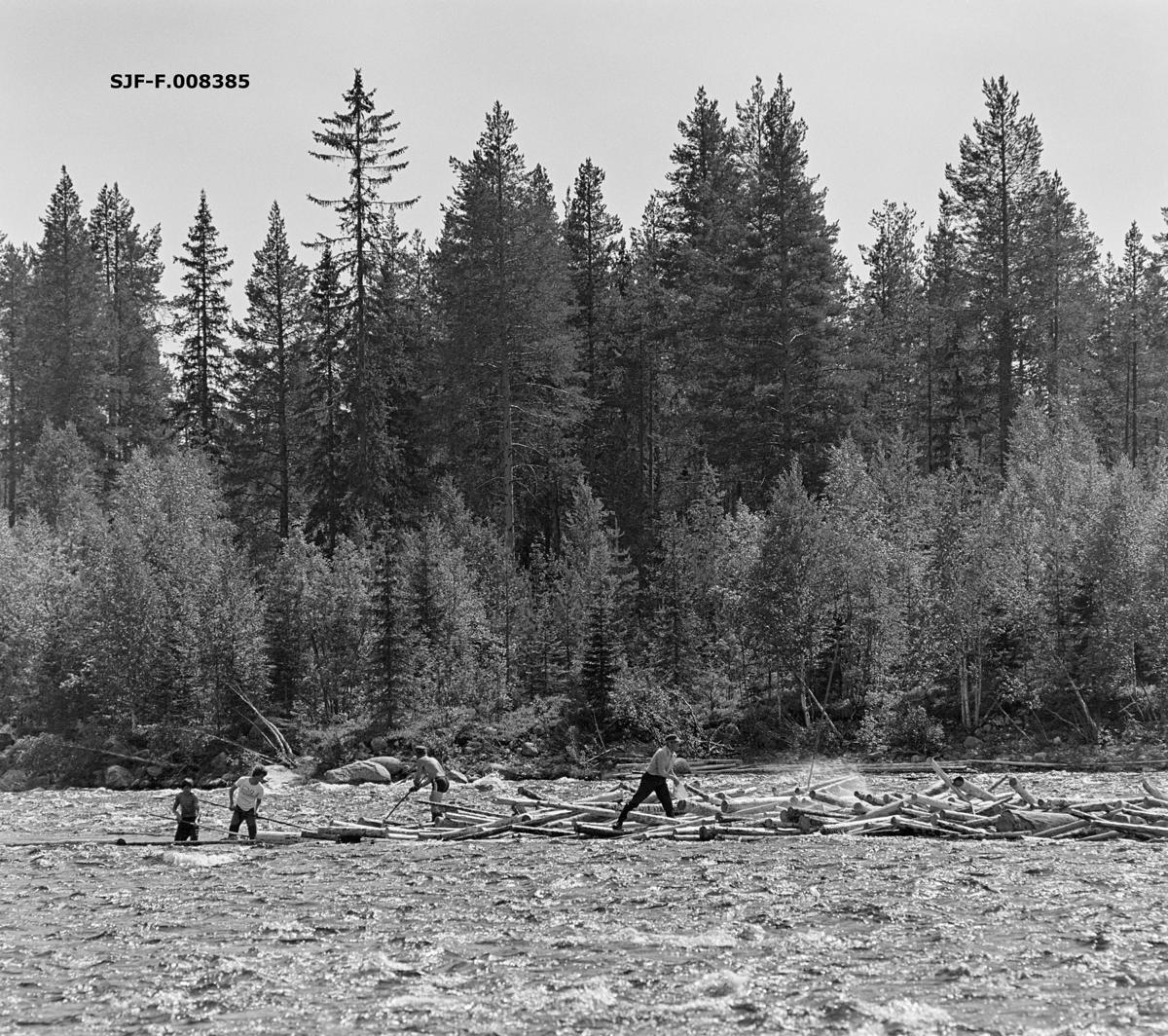 Fra tømmerfløtinga i Trysilelva i juni 1978.  Bildet er tatt på tvers av elveløpet, hvor det hadde satt seg fast en del tømmer (slipvirke), antakelig i et grunt parti i ellers hurtigstrømmende vann.  Da dette fotografiet ble tatt arbeidet fire sommerlig antrukne fløtere med å løsne stokkene på den nedre delen av haugen. Karene var (fra venstre) Kjetil Olager fra Innbygda i Trysil, Bjørn Graff, Einar Liberg og Ole K. Rømoen, de tre siste fra Jordet i Trysil. På motsatt elvebredd vokste det småskog, med et eldre blandingsbestand av furu og gran i bakgrunnen.  I 1978 skal det ha vært innmeldt 70 699 kubikkmeter tømmer til fløting i Trysilelva.  Tømmeret gikk til svenske kjøpere, som til sammen skal ha mottatt 112 463 fra Trysilvassdragets nedslagsfelt.  Differensen mellom de to tallene må antakelig ha vært virke som ble transportert over riksgrensa på lastebiler.   I 1978 sysselsatte Klarälvens flottningsförening 27-28 sesongarbeidere med fløting på norsk side av grensa.  Mange av disse var veteraner, men fløtingsledelsen var opptatt av å rekruttere yngre aktører også, med sikte på at fløtinga i Trysil skulle fortsette sjøl om den ble nedlagt i mange andre vassdrag.  Langs Trysilvassdraget var det stor interesse for slikt arbeid. Fløting.