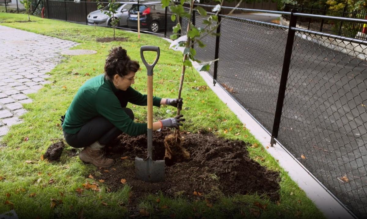 I Amber Abletts sosiale prosjekt, Plommetrærne på Alrek, plantes plommetrær som vil kunne høstes fra av alle innenfor og utenfor Alreks hagegjerde.  Alrek har en stor hage mot sørvest. Et mål for Alrek helseklynge har vært å koble sammen institusjonen og dens brukere med byen. Amber Ablett vil over tid skape et relasjonelt kunstprosjekt som går ut på å danne et fellesskap for å ta vare på, høste og dele oppskrifter fra fem plommetrær plantet i hagen. Gjennom prosjektet etableres relasjoner på tvers av disipliner og roller, det være seg studenter, ansatte og husets naboer. Plommetrærne er plantet ved  grenselinjen til helseklyngens tomt. Grenenes blomster og frukter kan dermed plukkes både fra utsiden og innsiden av tomten. Plommer har vært dyrket i Norge siden 1200-tallet. På Vestlandet har det milde klimaet gitt gode forhold for plommedyrking. Dermed er plommer blitt en del av den norske matkulturen, i syltetøy, kaker og vin. Prosjektet vil samle inn, tilgjengeliggjøre og på sikt tilberede plommeoppskrifter fra deltagere og bidragsytere i prosjektet. Den langsomme syklusen som følger plommedyrkningen kan påminne om den sakte, stabile og jordnære utvikling av læring og forskning som skal foregå i bygget.  email: plumtree@alrek.no  instagram: @plommetraerne_på_alrek