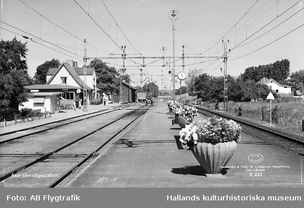 """Vykort, """"Åsa järnvägsstation."""" Stationen sedd från spårområdet med stora blomsterkrukor på perrongen mellan spåren. Stationsbyggnaderna ses i bakgrunden till vänster i bild. Stationen anlades vid Göteborg-Hallands järnväg 1888."""