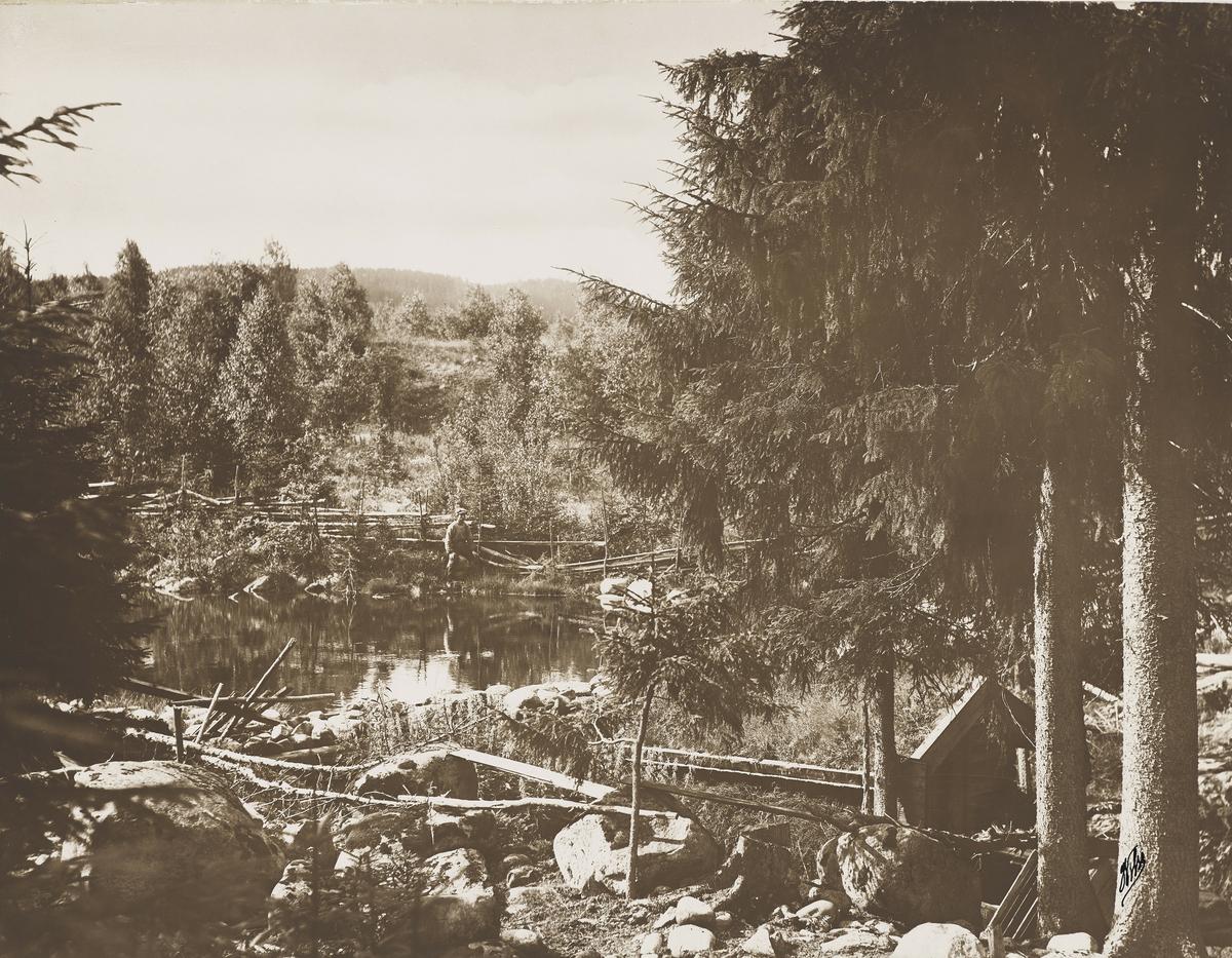 Landskapsbilde med skog, et vann. En mann sees litt til venstre for midten i bildet.  Et vann for utklekking av ørret.