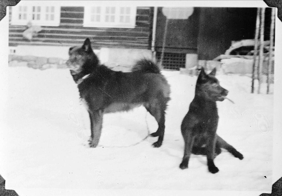 Hund, snø, hage,