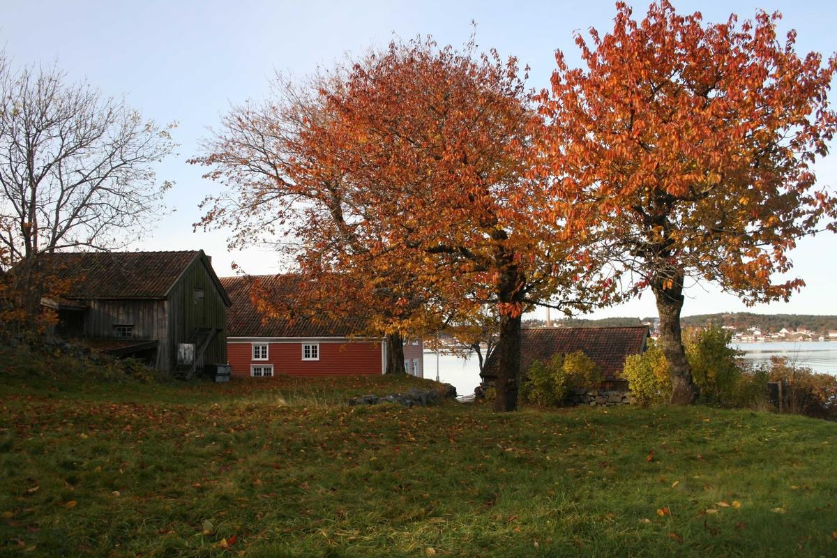 Merdøgaard, gårdstun sett fra sør, fjøs og våningshus t.v. og sjøbod t.h.  Tuntre, lønn, høyest,  i midten. Kirsebærtrær t.h. med rødt løv. Litt av Revesandsfjorden i bakgrunnen t.h.