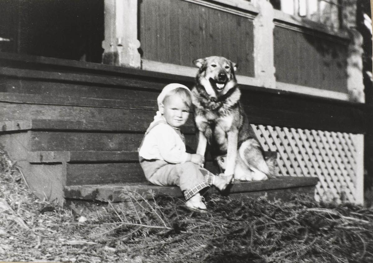 Liten gutt på trapp med hund.