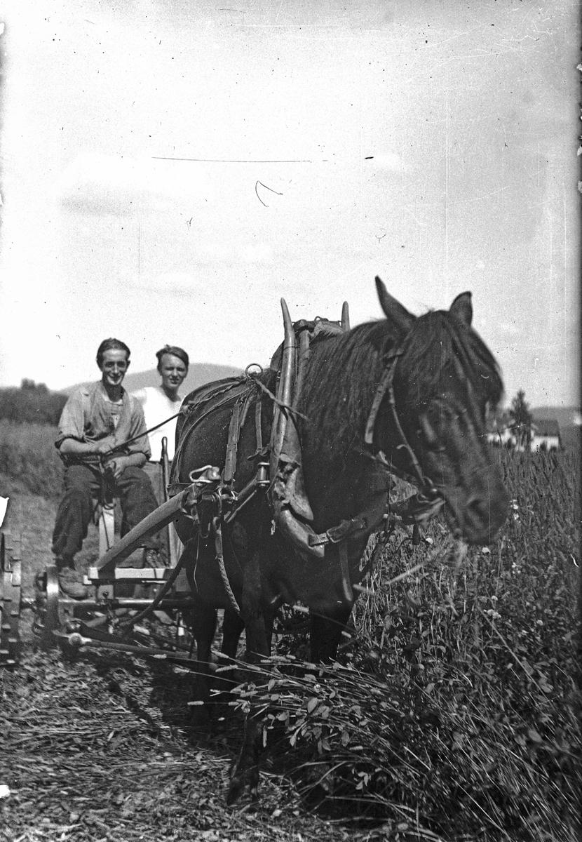Hest forspent slåmaskin. Rudolf Skovly og Kristian Bjercke bak
