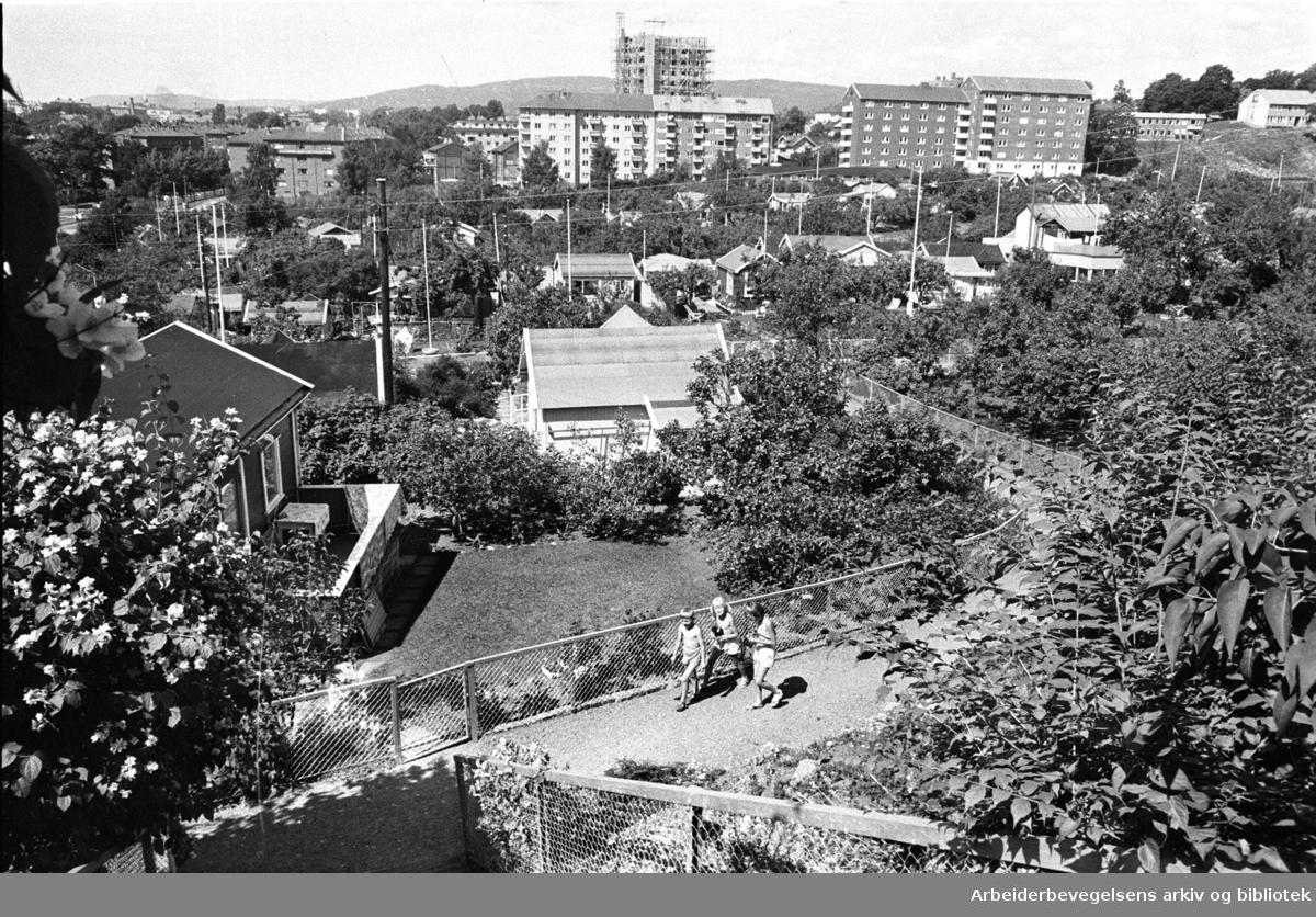 Rodeløkka kolonihage, .juli 1965