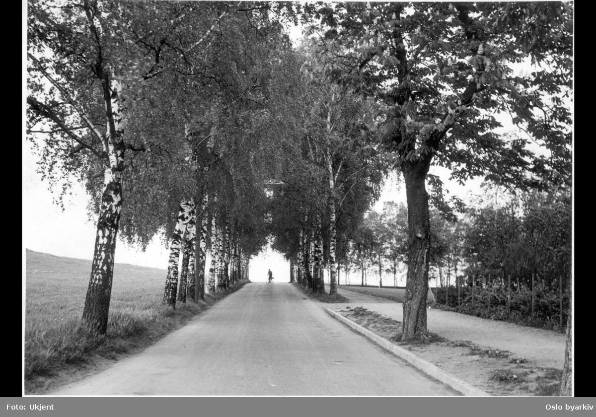 Bygdøyveien mot Kongsgården? Bjerke-allé. Syklist på veien.