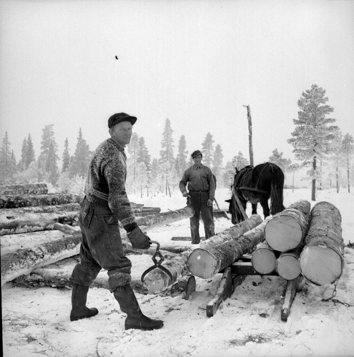 Tømmerlunning. Tømmertransport med hest. Skogbruksarbeidere. Berger Langmoen A/S.